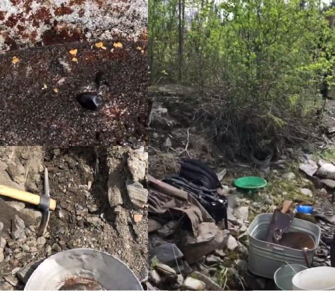 Video Bruin Creek