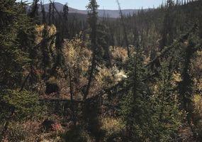 Landschaft am Pat Murphy Creek