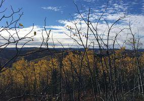 Landschaft am Five Mile Creek