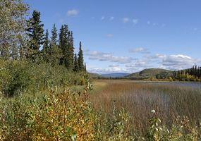 Landschaft im Yukon