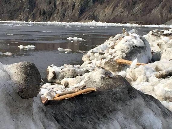 Melting snow on the Yukon River